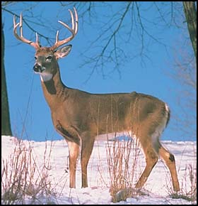 Deer Hunting Shooting House Plans Information | Maxx Sports Guides